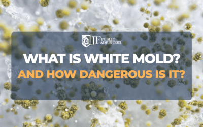 What Is White Mold and How Dangerous Is It?